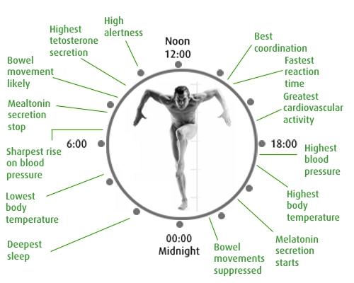 human body zones