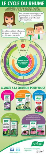 Infographie Cycle du rhume